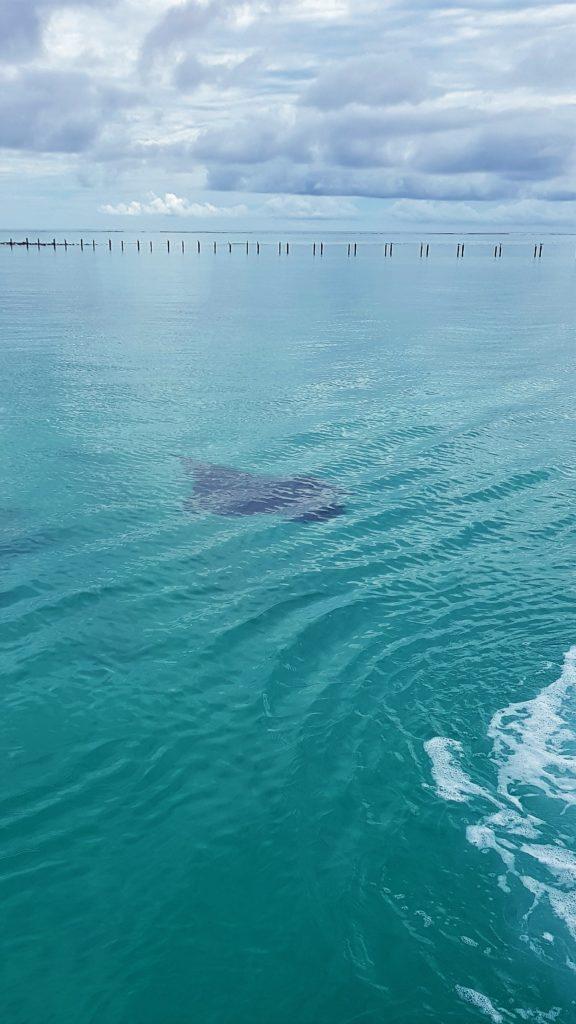 Maldive: manta